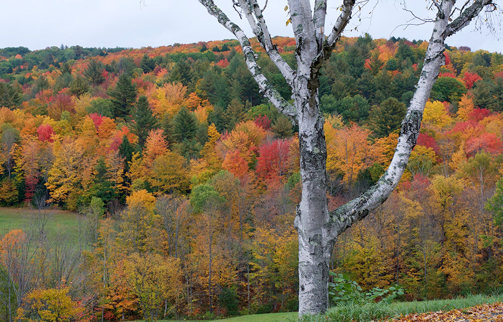 Vermont town forests