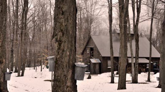 Catching the Sugarmaking 'Bug' in Vermont
